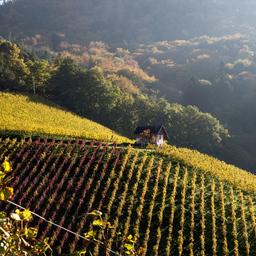 Offenburger Weinspaziergänge Ortenberg - Rundweg Ortenberg