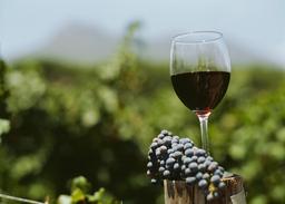 Weinmesse Metropolregion Montpellier